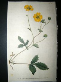 Curtis 1789 Hand Col Botanical Print. Large Flower'd Potentilla 75